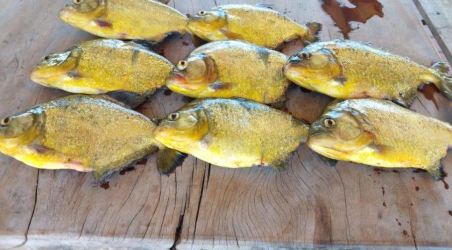 Center pescado bataguassu 11 de abril de 2019 672x372 1