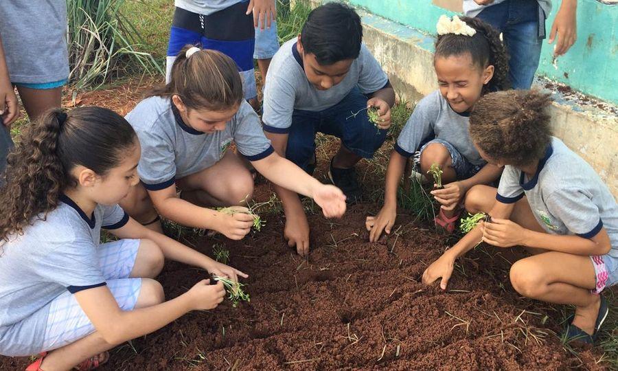 Center projeto horta escolar 1