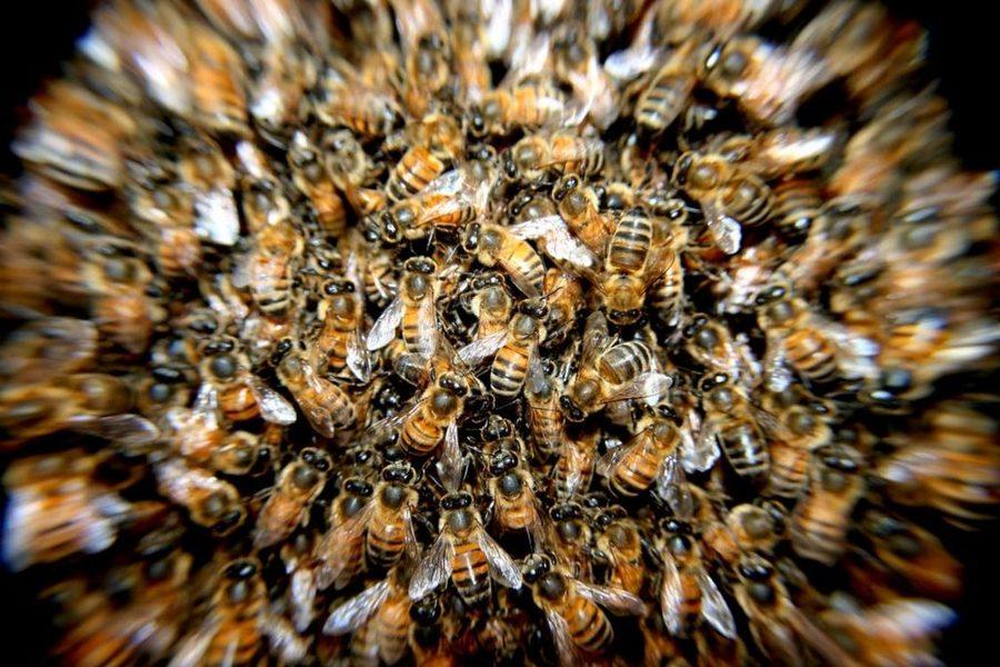 Center abelhas