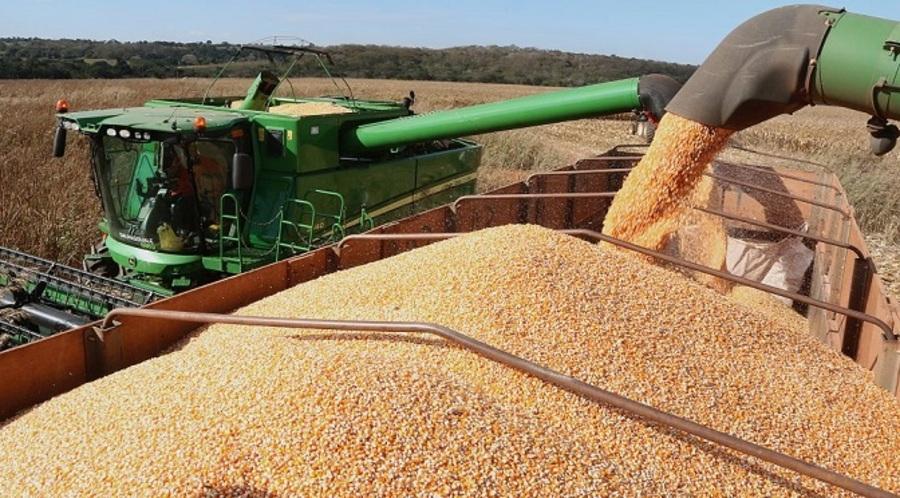 Center colheita de milho em pedro gomes 4 1024x567