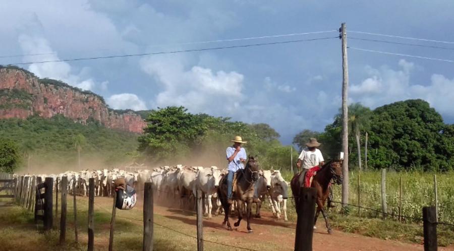 Center gado