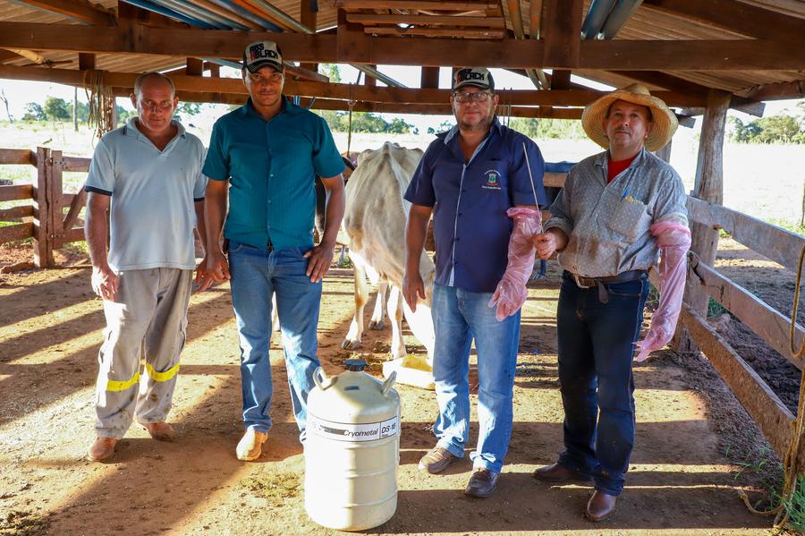 Projetos reduzem em até 70% mortalidade bovina em assentamentos de Nova Andradina - Nova News