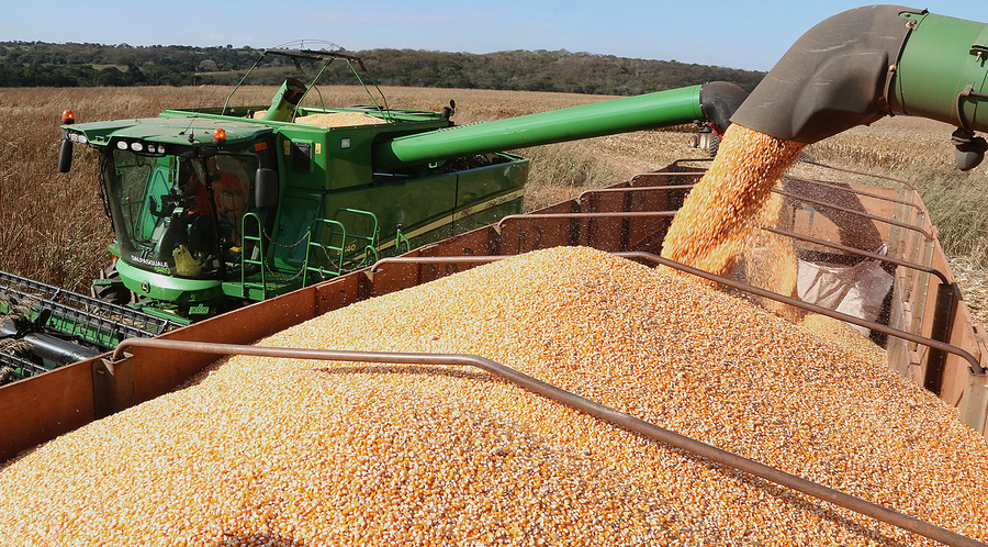 Center colheita de milho em pedro gomes 4