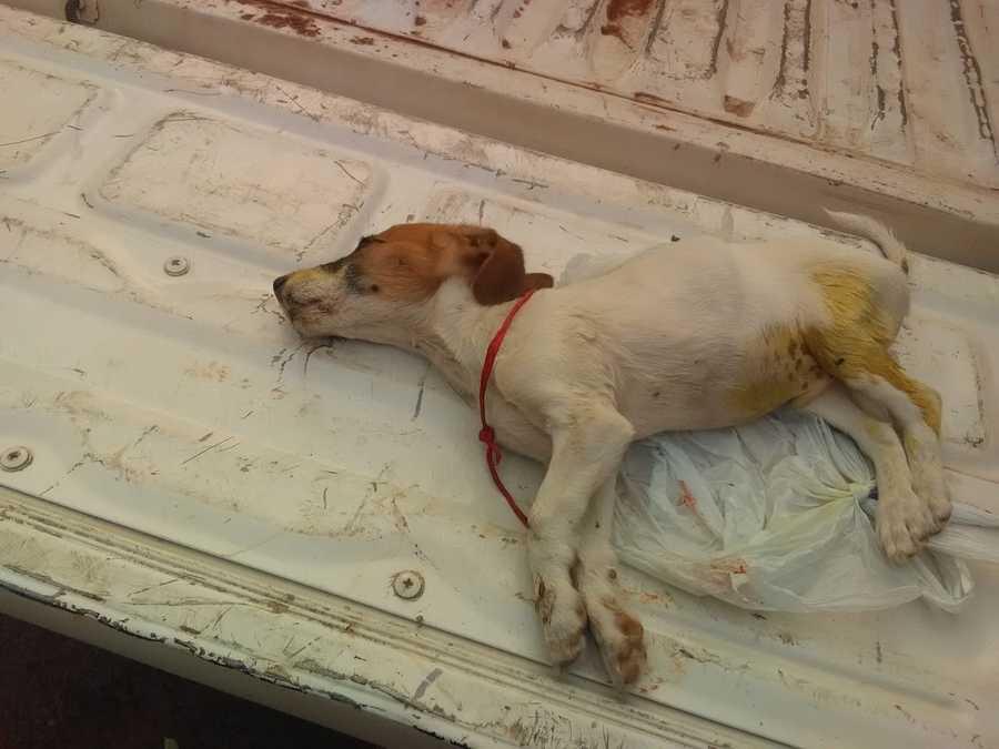 Center cachorro morto maus tratos bela vista 13 de setembro de 2019