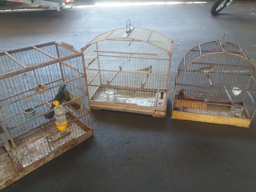 Center aves