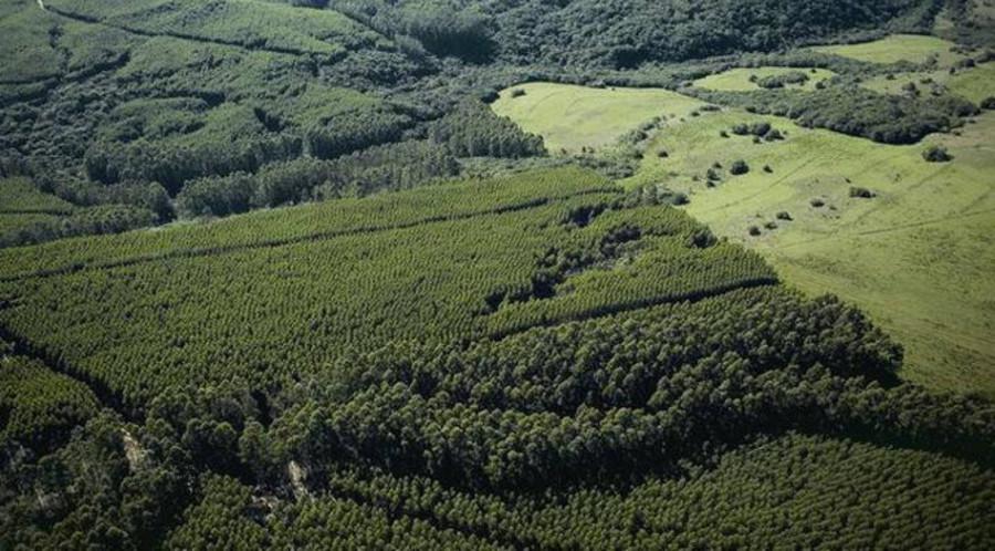 Center floresta agencia camara noticia