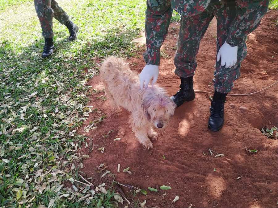 Center cachorro maus tratos bataypor em nova andradina 18 de junho de 2020