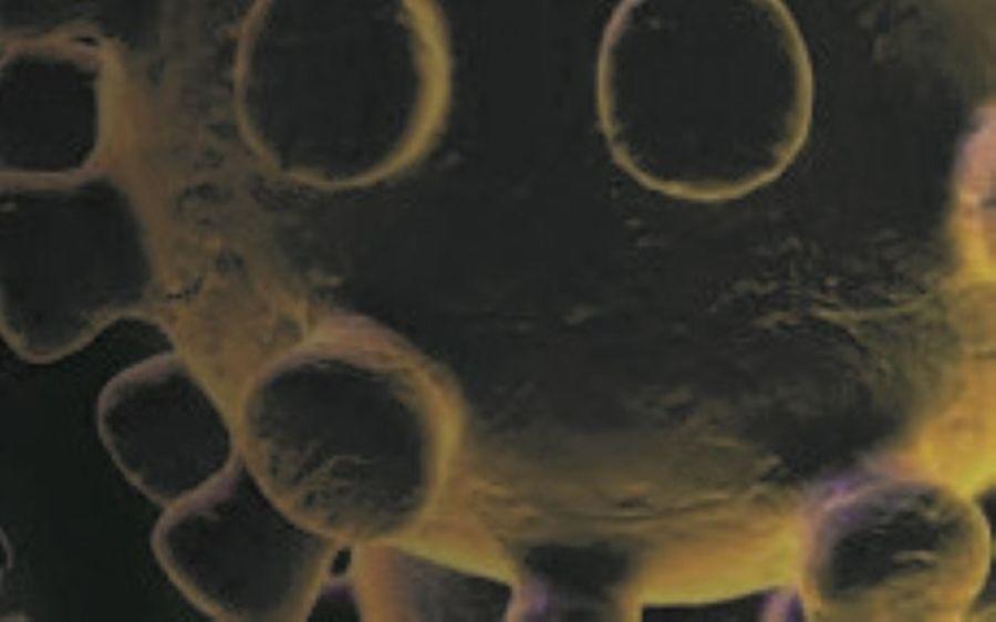Center center banner coronavirus