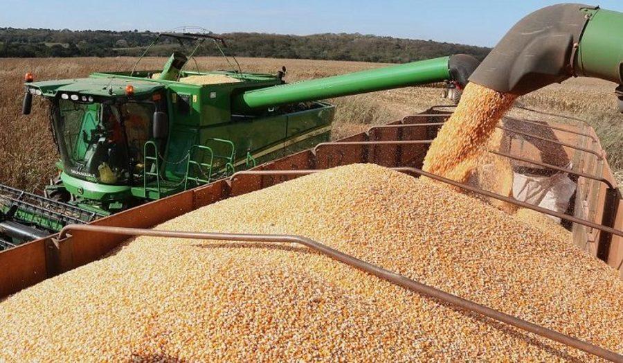 Center colheita de milho em pedro gomes 768x425 730x425