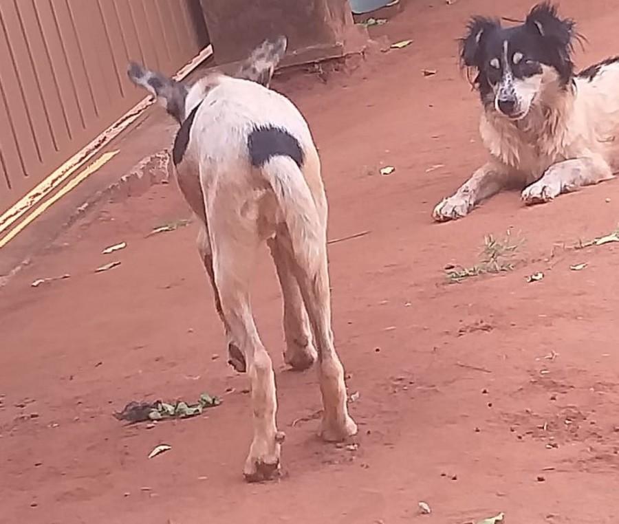 Center cachorros maus tratos bataguassu 20 de outubro de 2020
