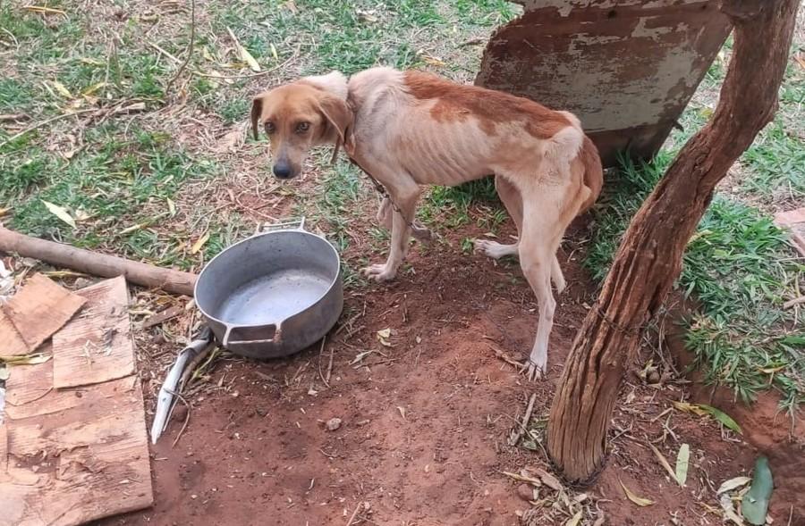 Center maus tratos cachorro bataguassu 18 de setembro de 2020