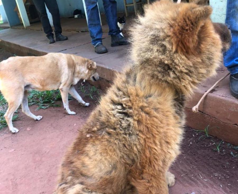 Center cachorro maus tratos nova andradina bataypora 10 de abril de 2021